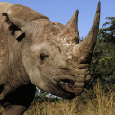 blackrhino